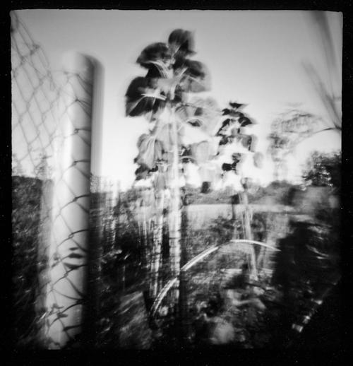 La Part des Anges: 12 images au sténopé